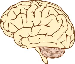 Gehirn Clipart