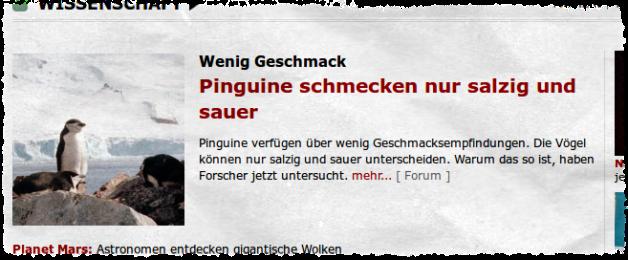 spiegel_pinguine